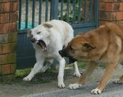 Branco di cani randagi aggredisce due bimbi. I piccoli salvi per l'intervento di un venditore